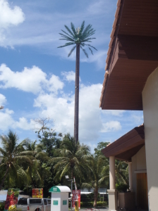 Watch out for the palm trees: Sometimes they are cellphone towers in disguise