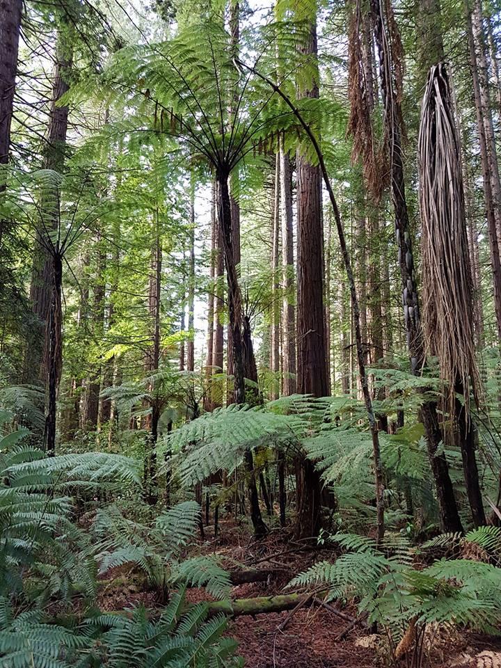 Top Things to do in Rotorua 1